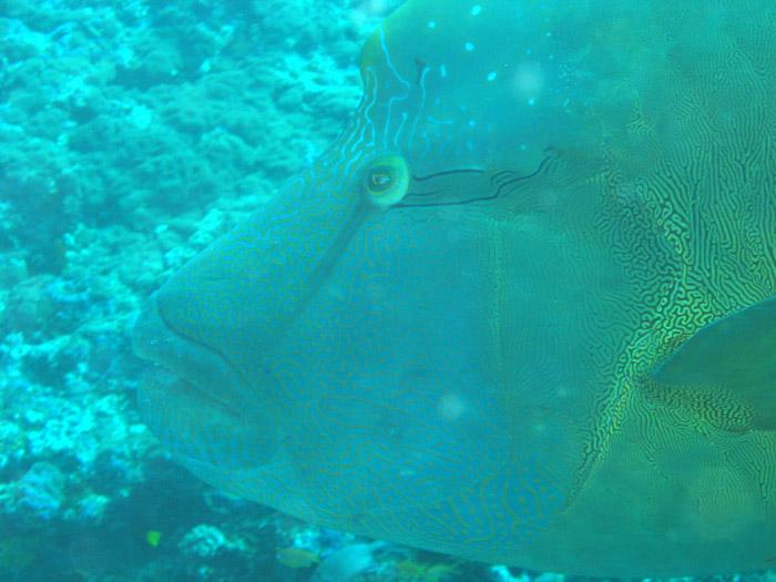 Bathala / Ari Atoll, Ari Atoll Bathala,Malediven