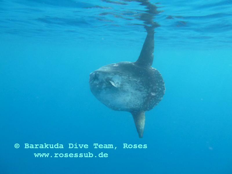 Roses SUB Barakuda Dive Team, Roses, Spanien, Spanien - Festland