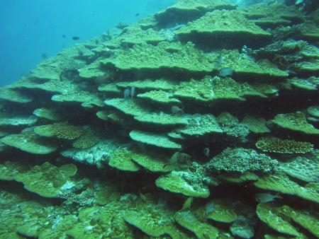 Aeolus Diving,Fihalhohi,Malediven