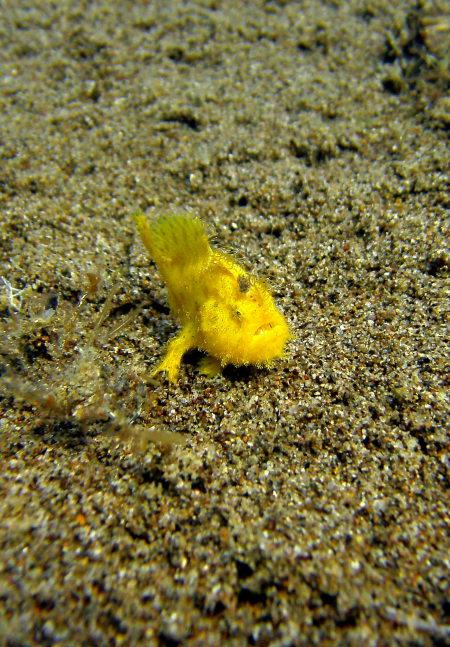 Dive Society El Doradoe Beach Resort Dumaguete,Philippinen