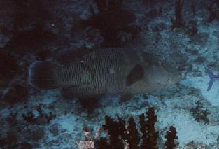 Filitheyo - Nilandhe Atoll, Filitheyo,Nord Nilande Atoll,Malediven