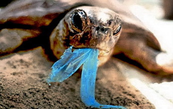 consumed plastic endangers turtles © Greenpeace