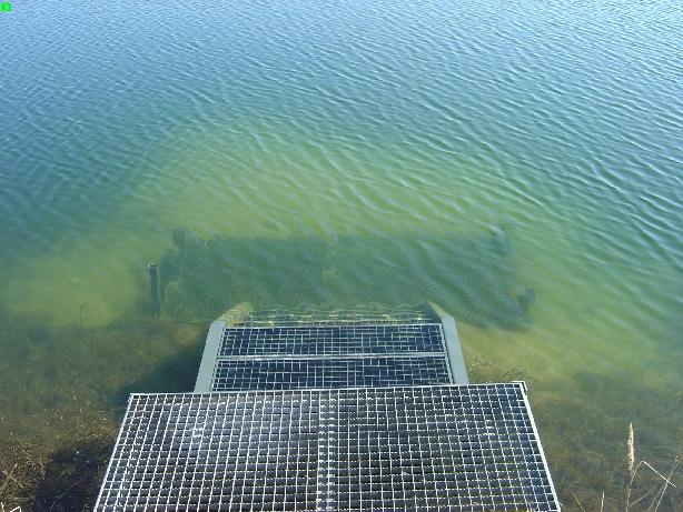 Tauchsee des TSC-Bonn Über- und Unterwasser, Tauchsee des TSC-Bonn,Nordrhein-Westfalen,Deutschland