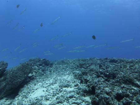 mar y mas,Corralejo,Fuerteventura,Kanarische Inseln,Spanien