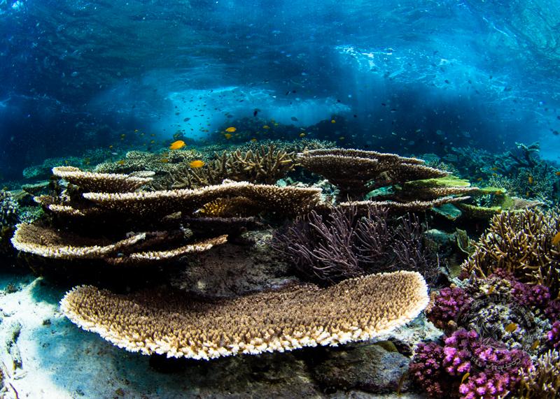 Pulau Pef, Raja Ampat, Pulau Pef,Raja Ampat,Indonesien