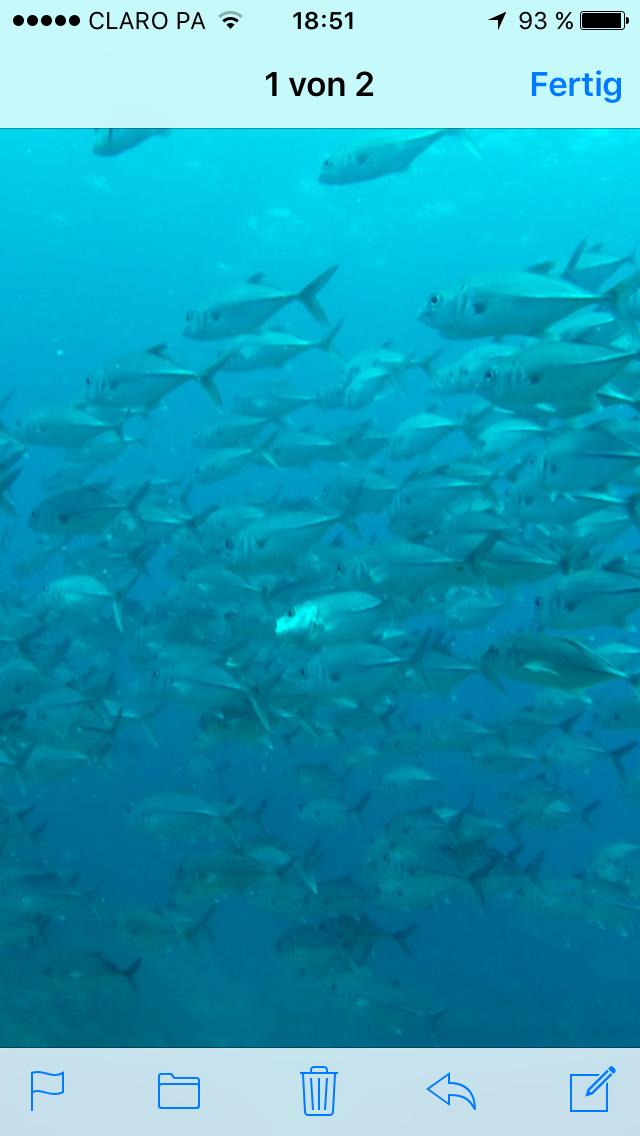 Schwarmfisch, Santa Catalina, Panama