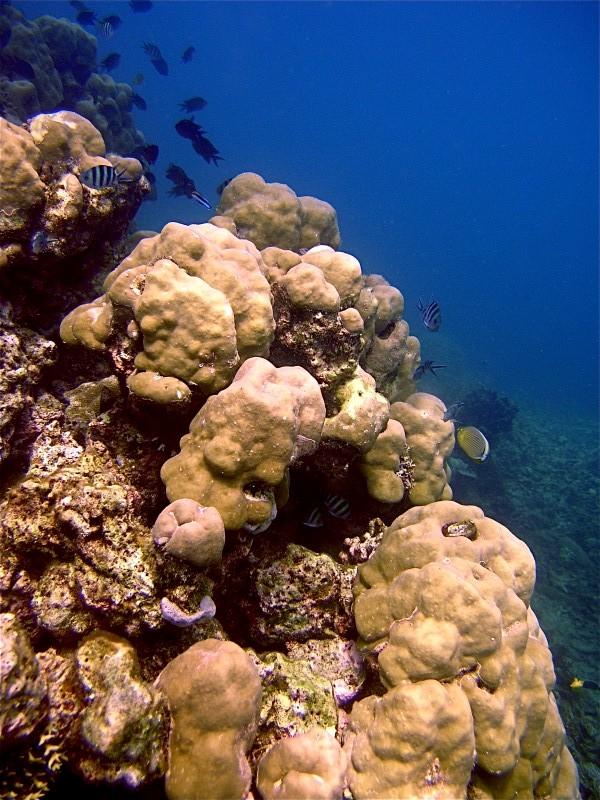 Tauchen mit Dirk Teil 2, Palawan/Honda Bay,Philippinen
