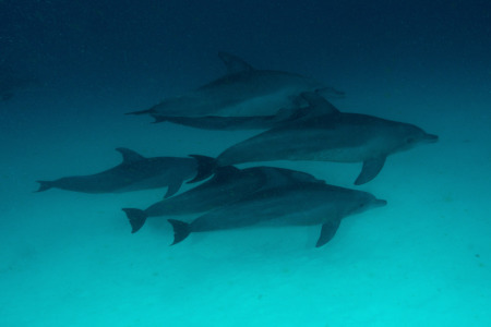 Divine Diving,Nungwi,Zanzibar,Tansania