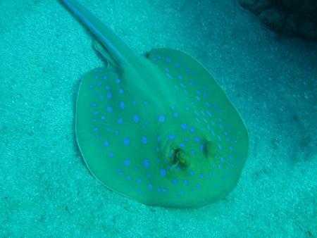 Matthes Reef Divers,Resta Reef Resort,Marsa Alam,Marsa Alam und südlich,Ägypten