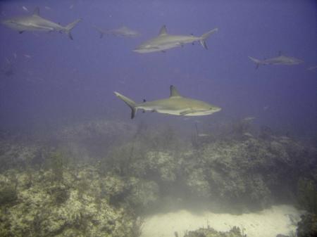 Viva Diving,Grand Bahama,Bahamas