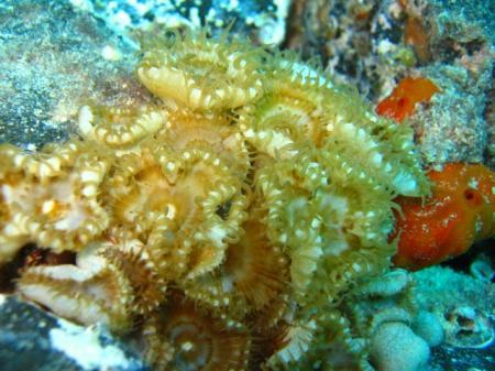 Aquanautic Club Lanzarote (ex Speedy`s Diving Center),Kanarische Inseln,Spanien