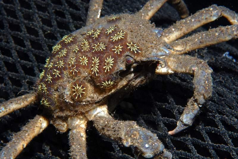 Stavanger, Stavanger und Umgebung,Norwegen,krabbe,netz,fischernetz