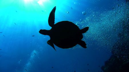 Beluga Reisen,Bastianos Diving Resort Bunaken,Sulawesi,Indonesien,Deutschland