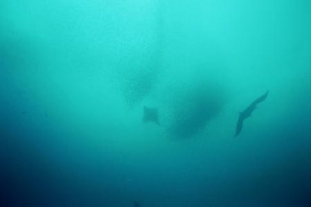 Giravaru,Planeta Divers,Malediven