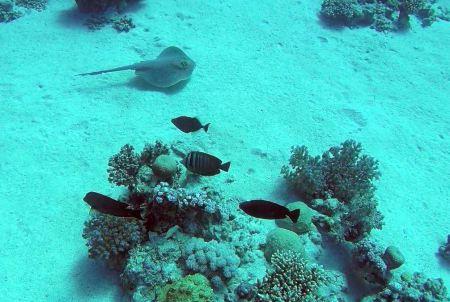 Wonderful Dive,Rohanou Resort,El Qusier,El Quseir bis Port Ghalib,Ägypten