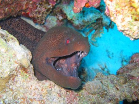 M/Y Seven7Seas,Orca Dive Club,Safaga,Ägypten