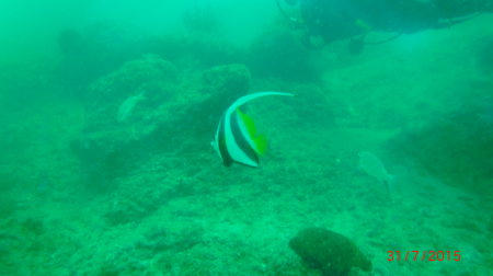 Al Boom Diving,Fujairah,Vereinigte Arabische Emirate