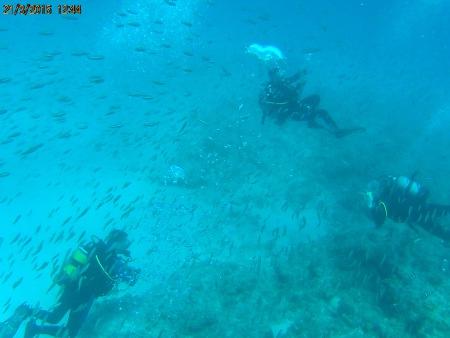 tibe-dive-mauritius,Mauritius