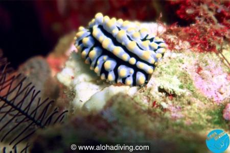 Aloha Ocean Adventures,Rawai,Phuket,Andamanensee,Thailand