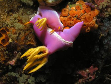 Murex Dive Resort,Banka Island,Sulawesi,Indonesien