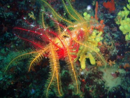 Lagona Divers,Insel Pag,Kroatien