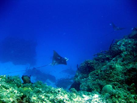 Breezes,Runaway Bay,Jamaika