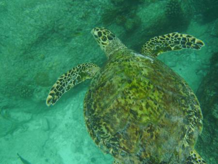 Denise Island,Seychellen