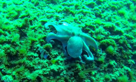 Il Grande Blu Diving Center,Santa Margherita Ligure,Italien