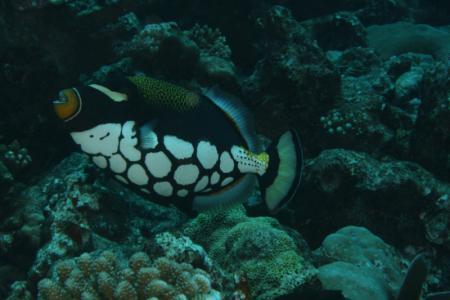 Alidhoo Atoll,Meridis Tauchbasis,Malediven