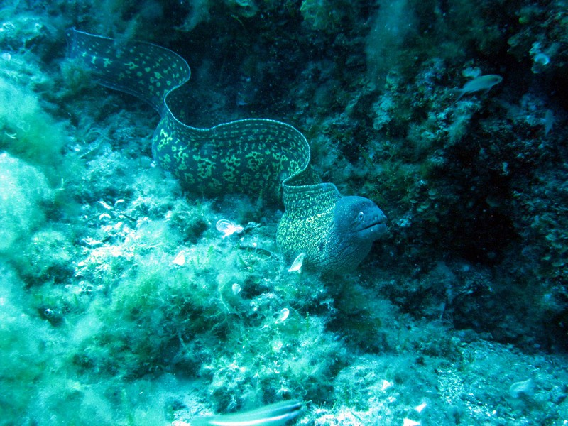 Marinepark beim DWS Diving Center, Santa Margherita Ligure, Portofino,Italien