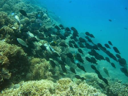 Hon Mun Marine Park,Nha Trang,Vietnam