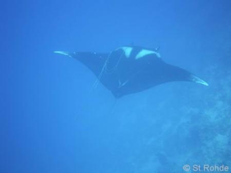 Sinai Divers,Naama Bay,Sharm el Sheikh,Sinai-Süd bis Nabq,Ägypten