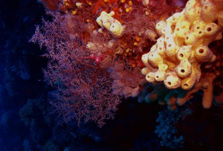 Dive Planet Cavo (ex Cavo Diving),Cavo,Elba,Italien