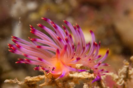 Dive-Down,Phuket,Andamanensee,Thailand