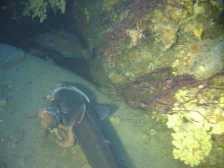 Talas Diving Center (Elba),Italien