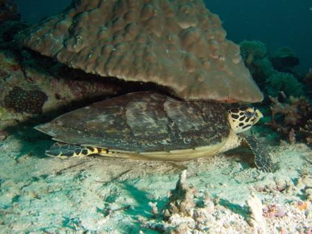 Last Frontier Dive,San Juan,Siquijor,Philippinen