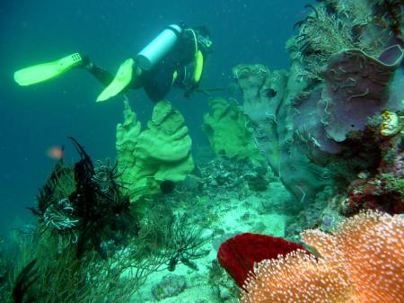 Cabanbanan Divers,Romblon,Philippinen