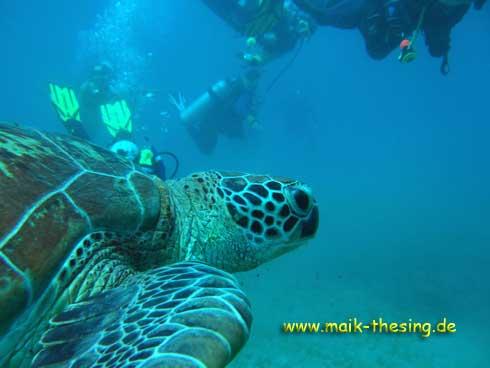 Marsa Alam - Beachsafari, Hausriff Beachsafari,Ägypten