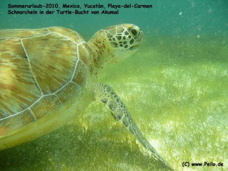 Yukatan,Cenoten,Mexiko
