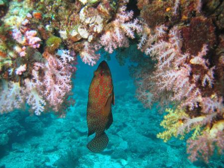 M/V Mermaid 2,Safariboot,Phuket,Thailand