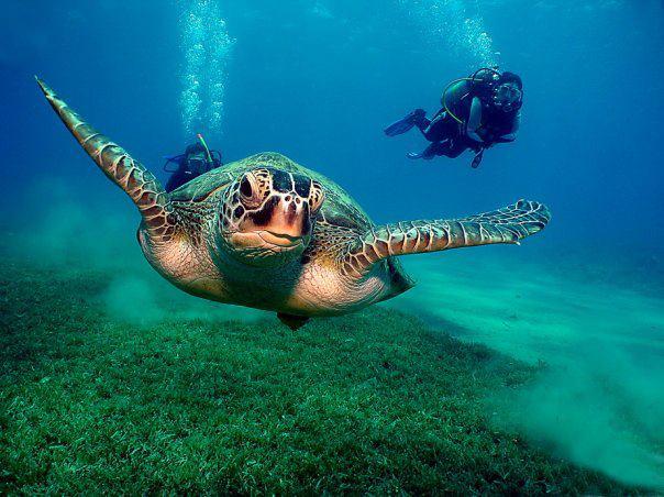 Sea Secrets Divers, Ägypten, Marsa Alam und südlich