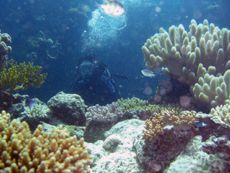 Cairns Outer Reef,Australien