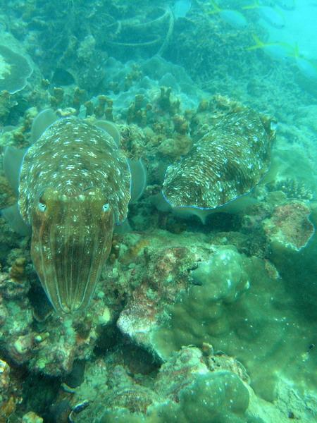 Airport Reef,Phuket Nai Yang Beach,Thailand