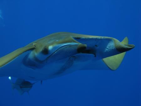 Cetacean Watching (CW Azores),Pico Azoren,Portugal