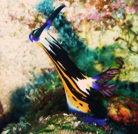 Aquatic Divers,Zerib Kebir - Il Khaf,El Quseir bis Port Ghalib,Ägypten