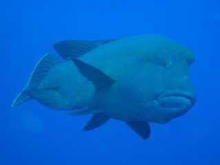 Palau, Palau allgemein,Palau