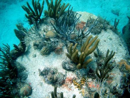Dive Paradise,Nassau,New Providence Island,Bahamas