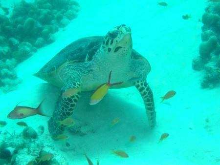 Kandooma Tourist Resort,Süd Male Atoll,Malediven