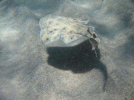 Tauchzentrum Atlantica,Pto. del Carmen,Lanzarote,Kanarische Inseln,Spanien