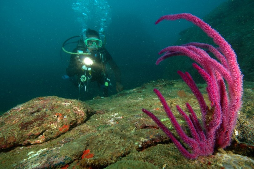 LSR Diving Passikuda, Sri Lanka